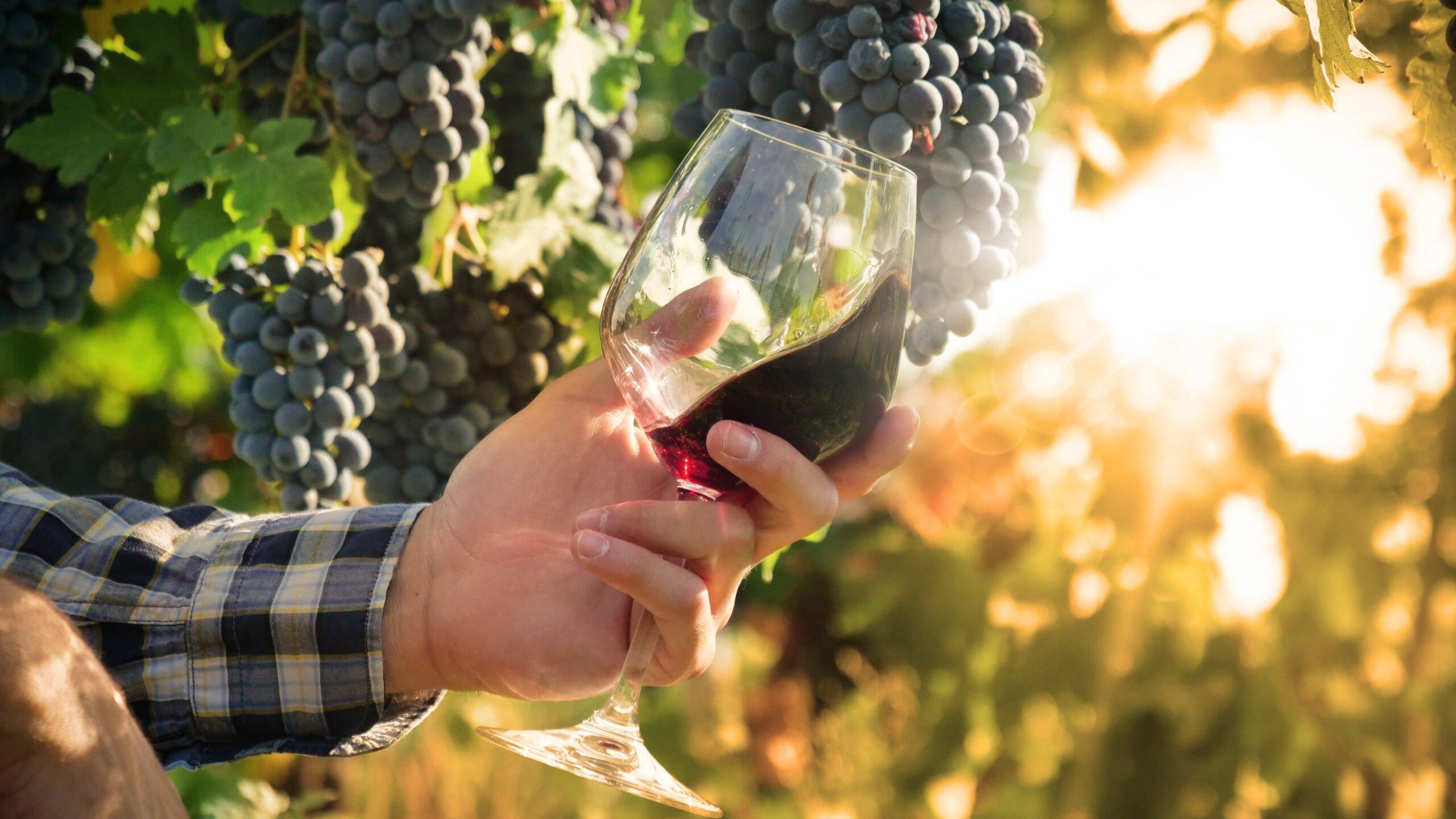 Roman Vineyard & Wine Tasting Experience From Rome_110_5
