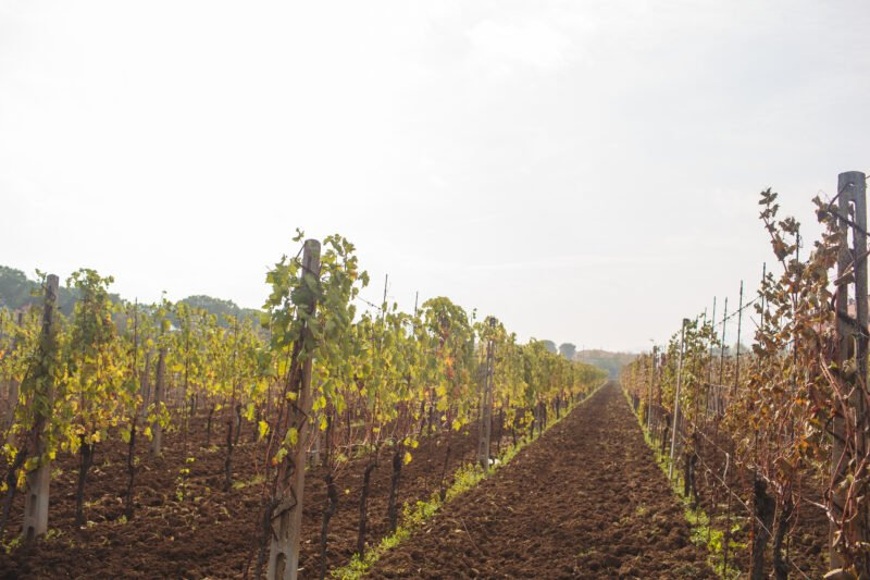 Roman Vineyard & Wine Tasting Experience From Rome_110_7