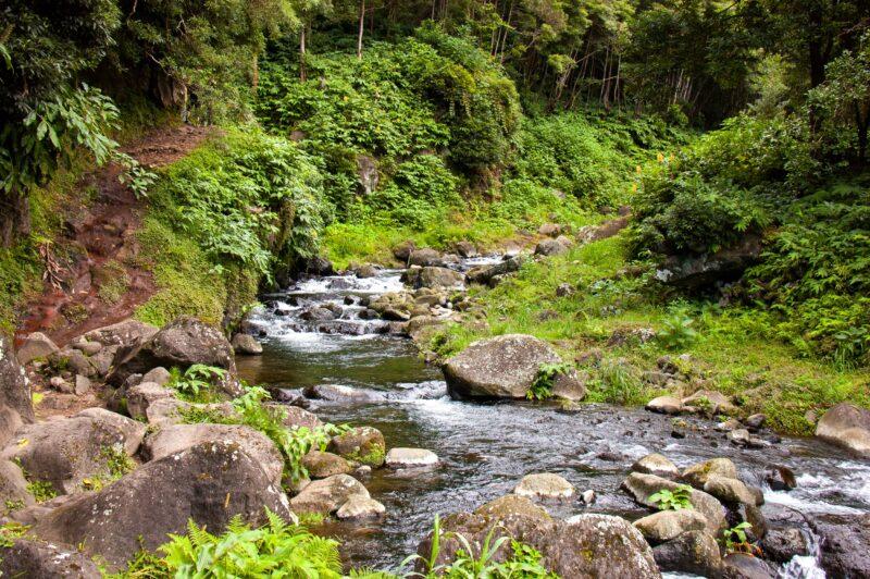 Salto Do Prego - Sanguinho Hiking Tour From Ponta Delgada