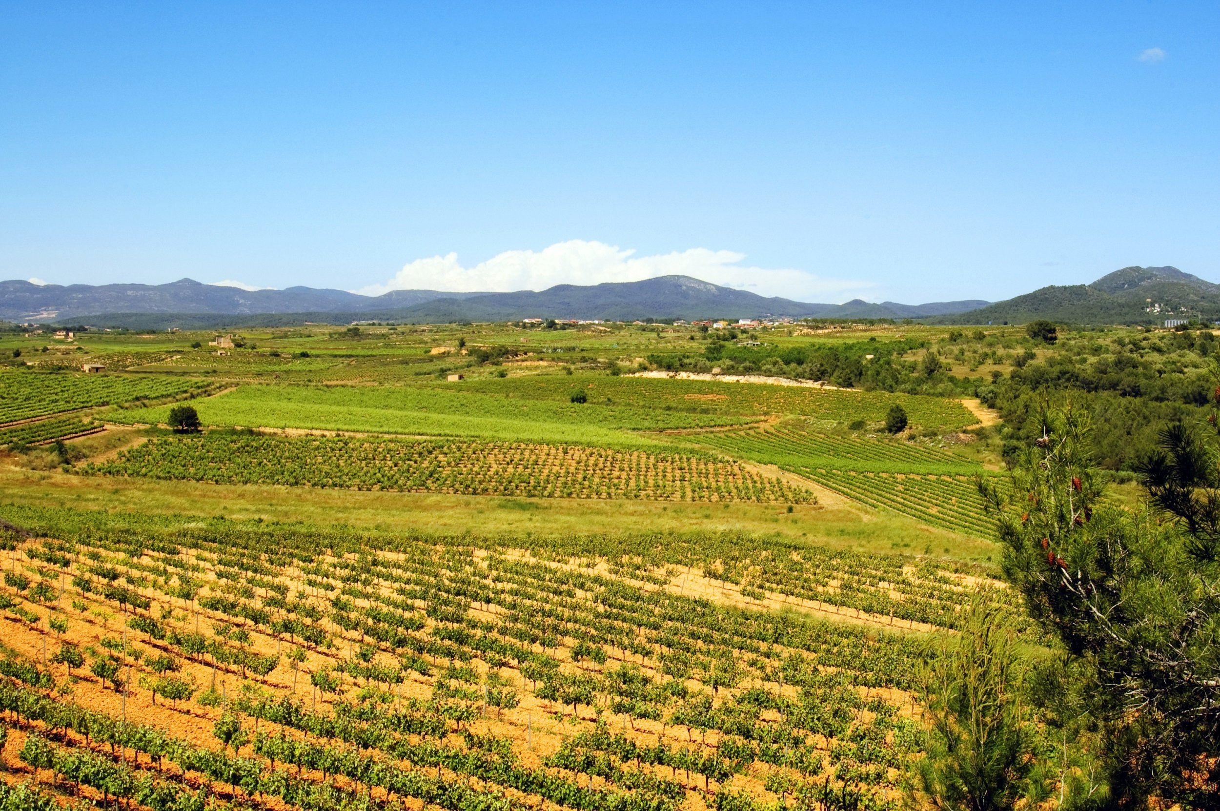 Tarragona & Wine Tasting Tour From Barcelona
