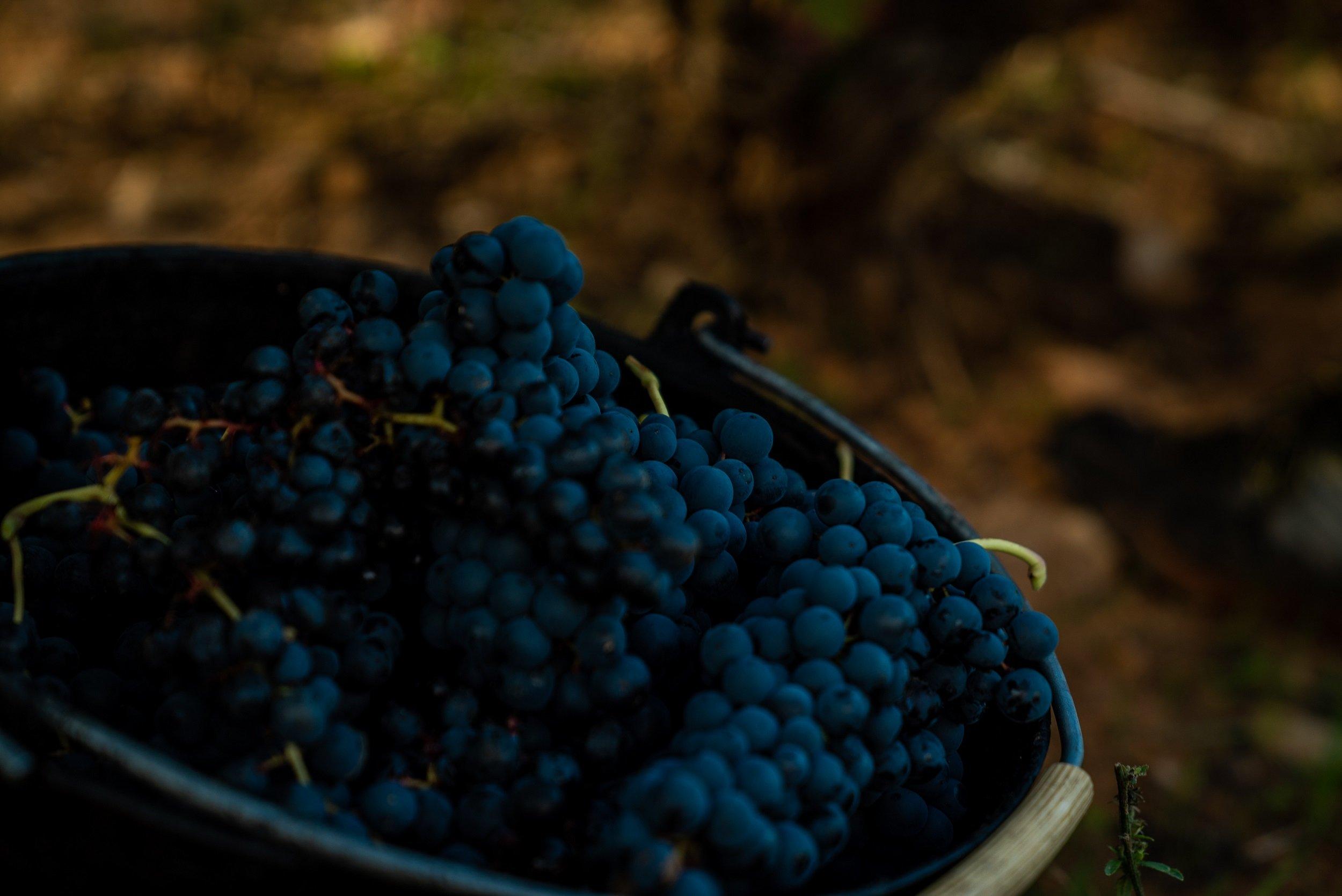 Tarragona & Wine Tasting Tour From Barcelona_4