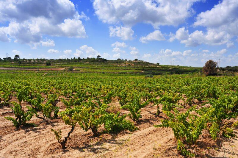 Tarragona & Wine Tasting Tour From Barcelona_5