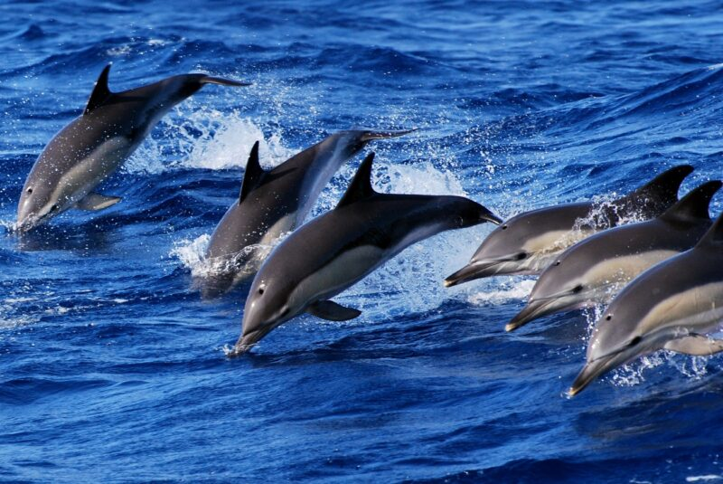 Whale And Dolphin Watching Tour From Ponta Delgada_106