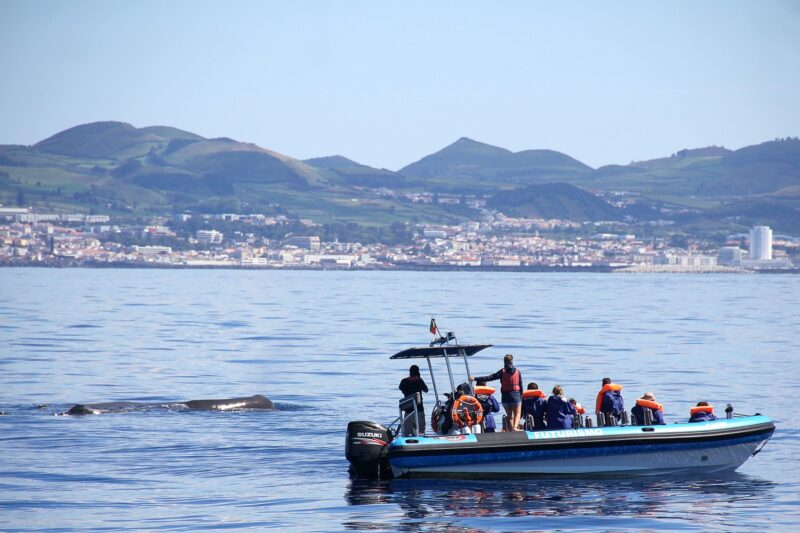 Whale And Dolphin Watching Tour From Ponta Delgada_106_1