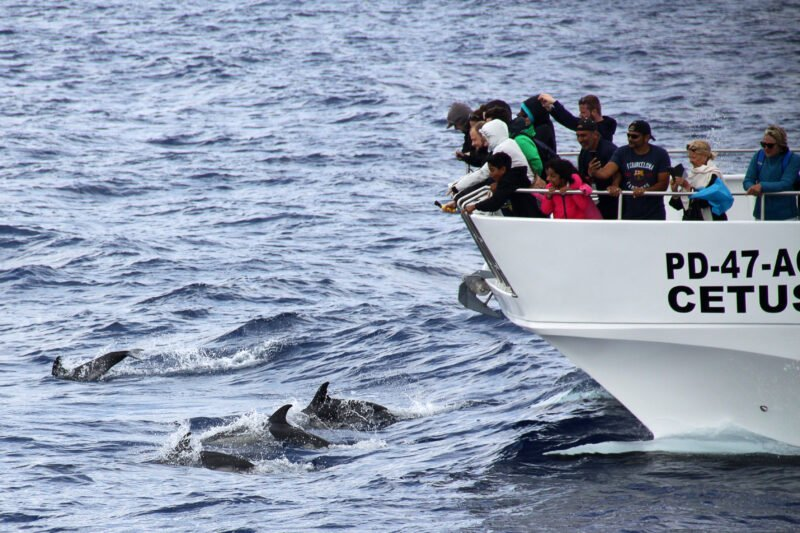 Whale And Dolphin Watching Tour From Ponta Delgada_106_3