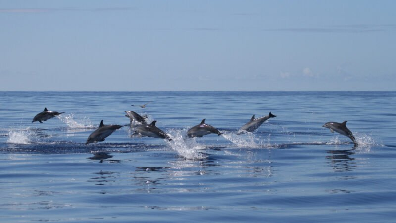 Whale And Dolphin Watching Tour From Ponta Delgada_106_4