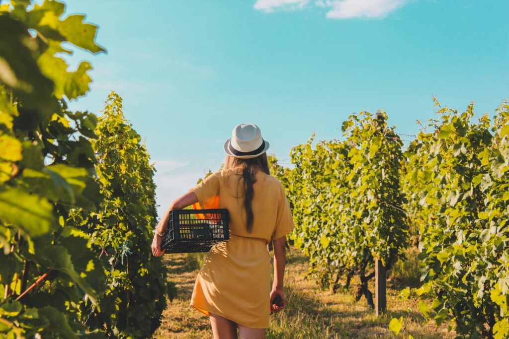 Vineyard 2 Wine Travel in Italy: An Insider Guide