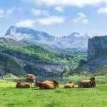 Picos De Europa Hiking And Spa Private Tour From Santander, Unquera, Panes And Torrelavega