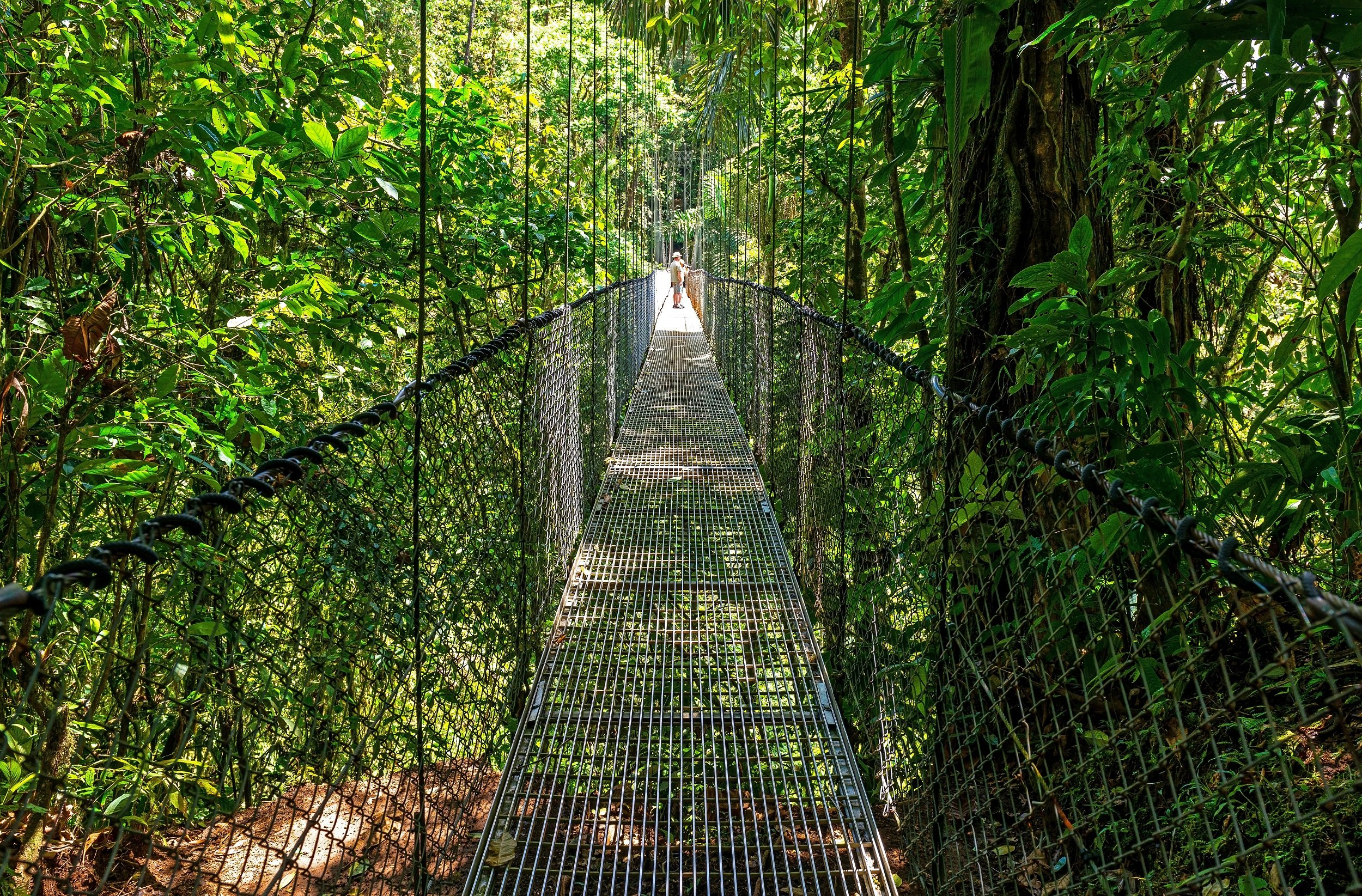 Arenal Hanging Bridges, La Fortuna Waterfall And Chocolate Tasting Tour From La Fortuna & Arenal_12