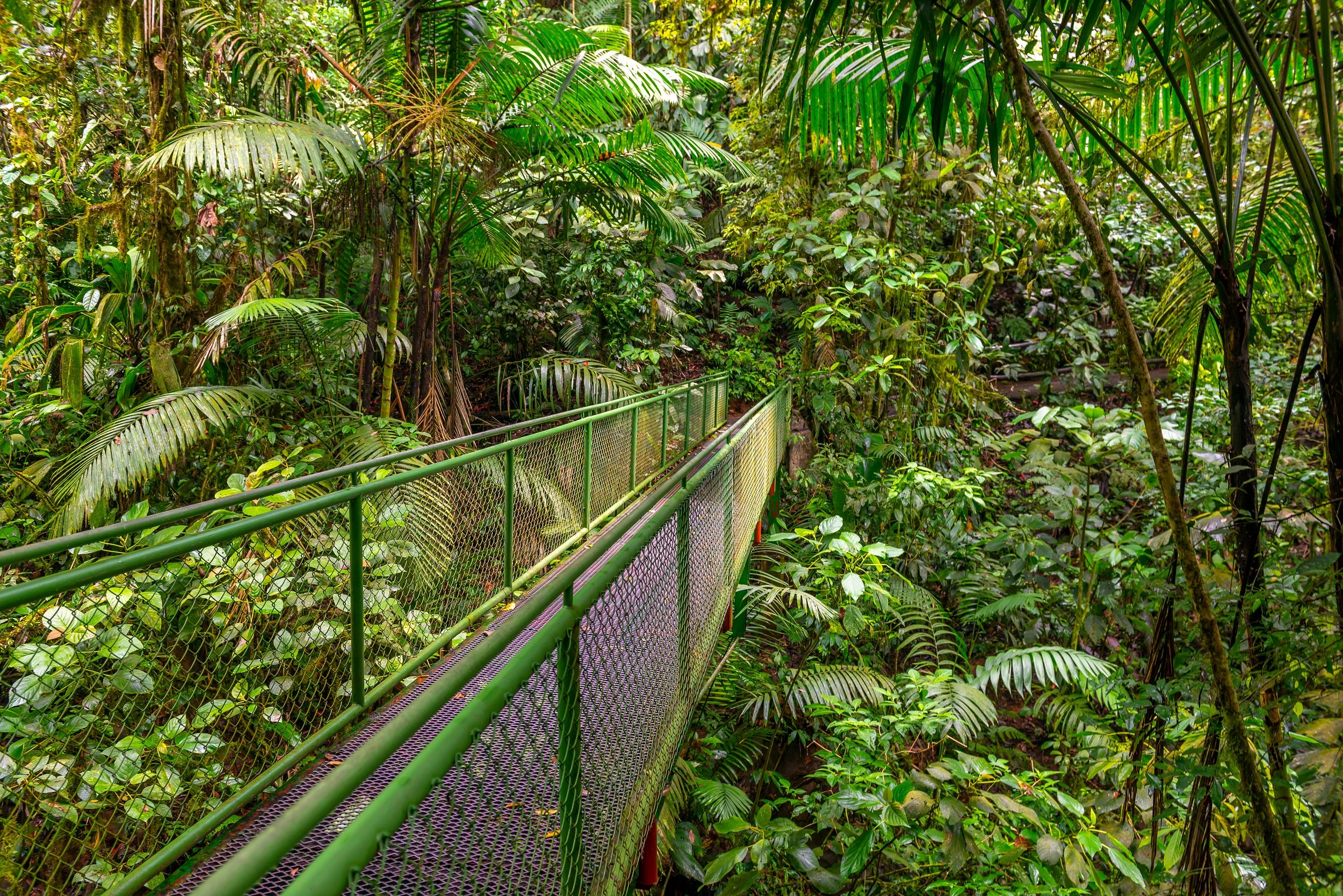 Arenal Hanging Bridges Tour From La Fortuna & Arenal_1
