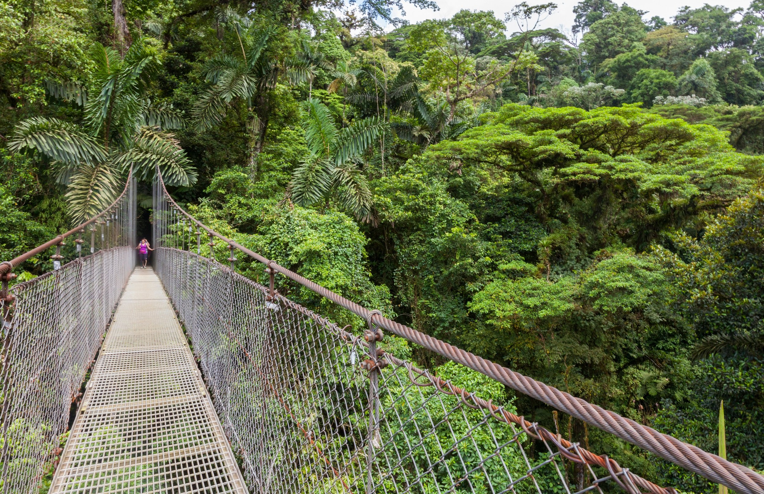 Arenal Hanging Bridges Tour From La Fortuna & Arenal_4