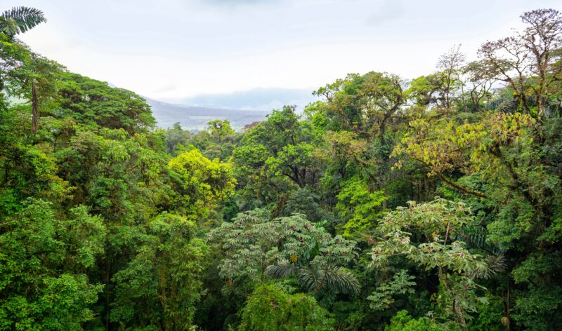Arenal Hanging Bridges And Chocolate Tasting Tour From La Fortuna & Arenal
