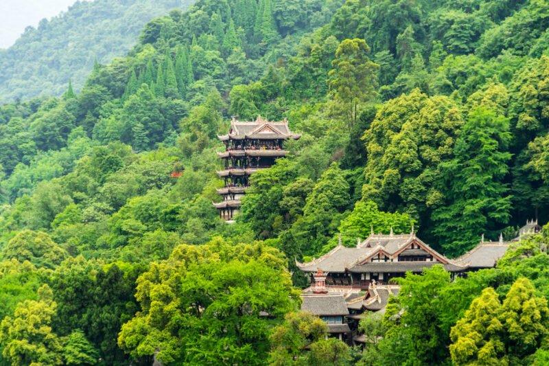 Chengdu Panda Base & Mount Qingcheng Tour 1