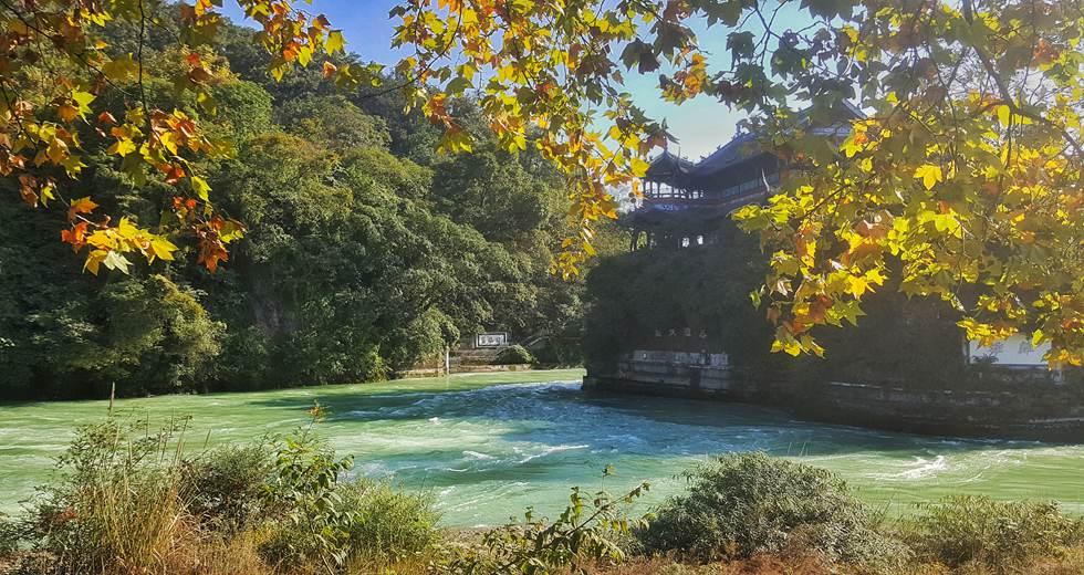 Chengdu Panda Base & Mount Qingcheng Tour 8