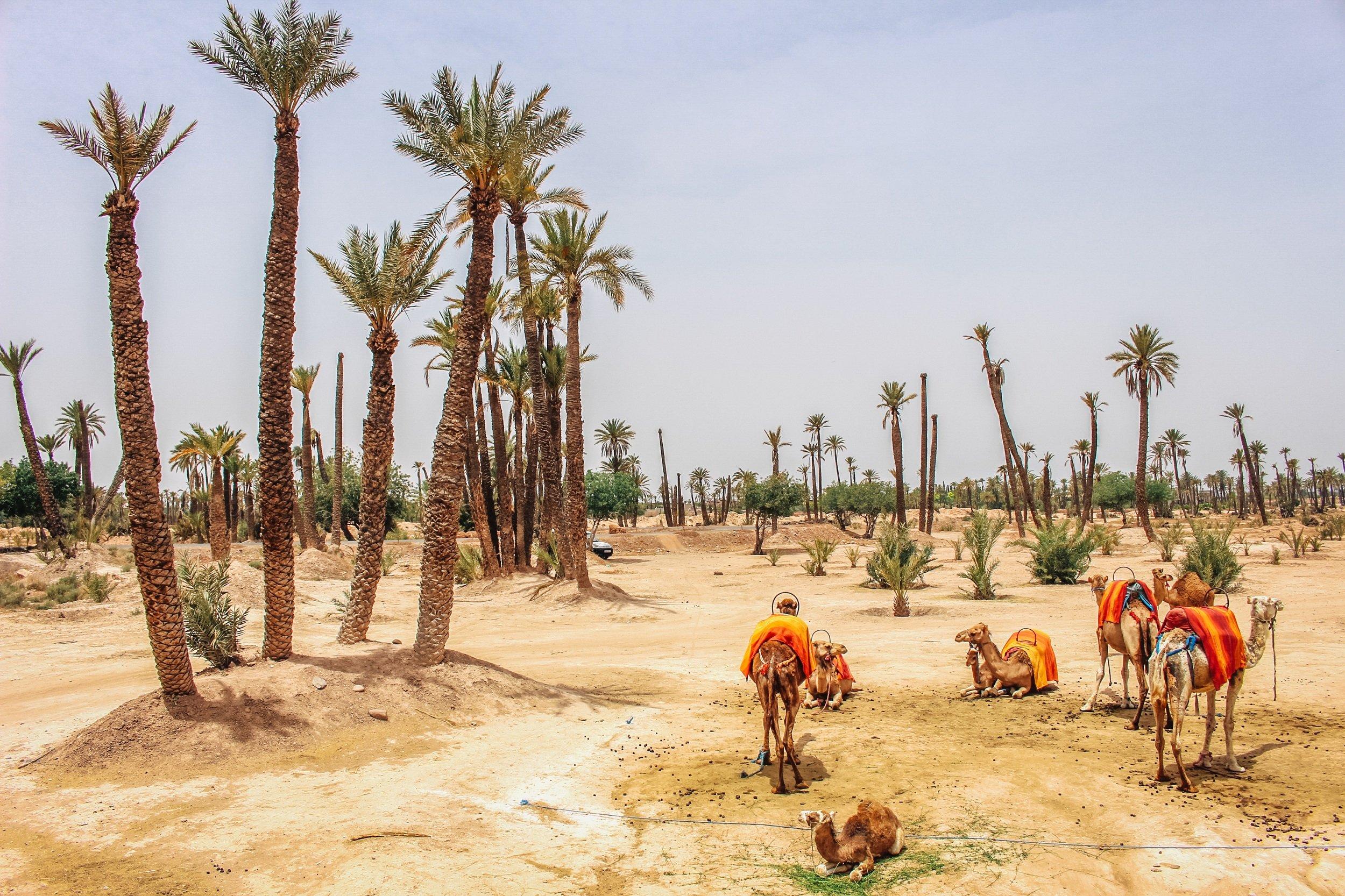 Desert & Palm Grove Quad Biking Tour From Marrakesh_1