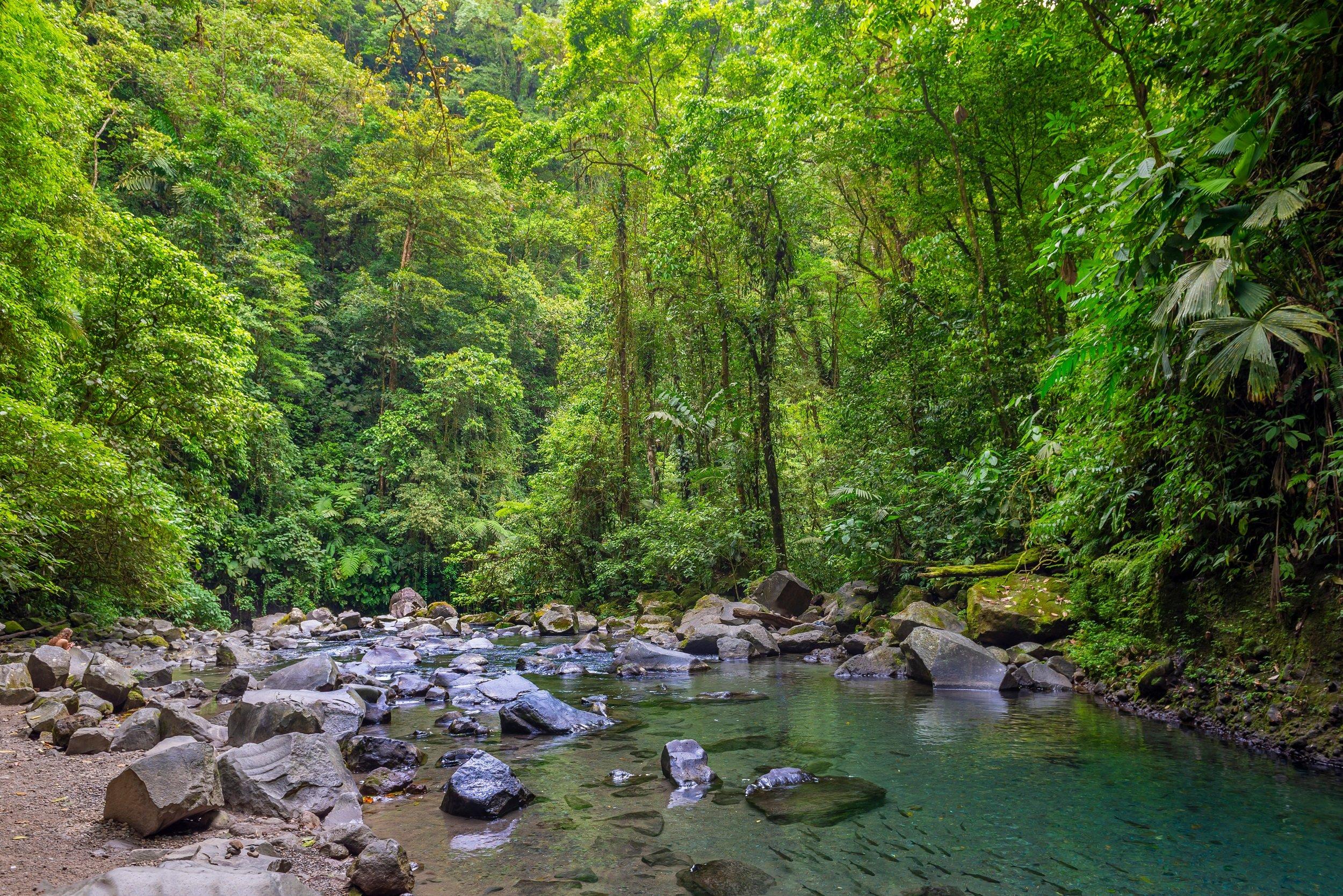 Peñas Blancas River Safari And La Fortuna Waterfall Tour From La Fortuna & Arenal