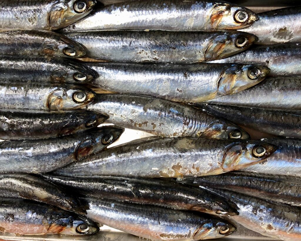 Anchovies Best tours from Santander