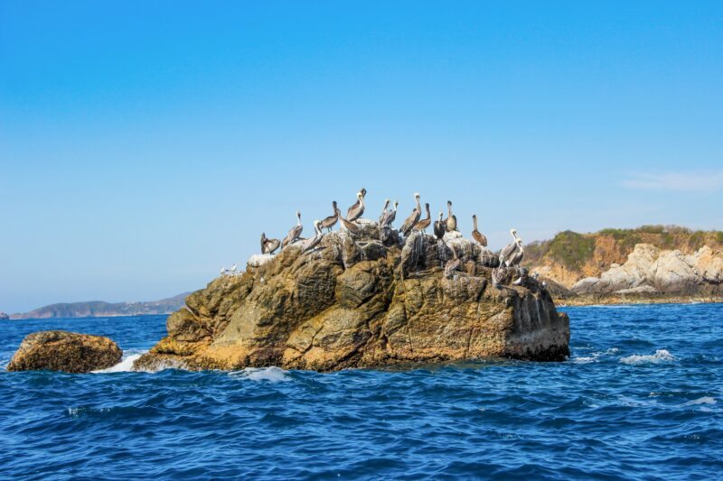 5 Bays Of Huatulco Rafting & Snorkeling Experience