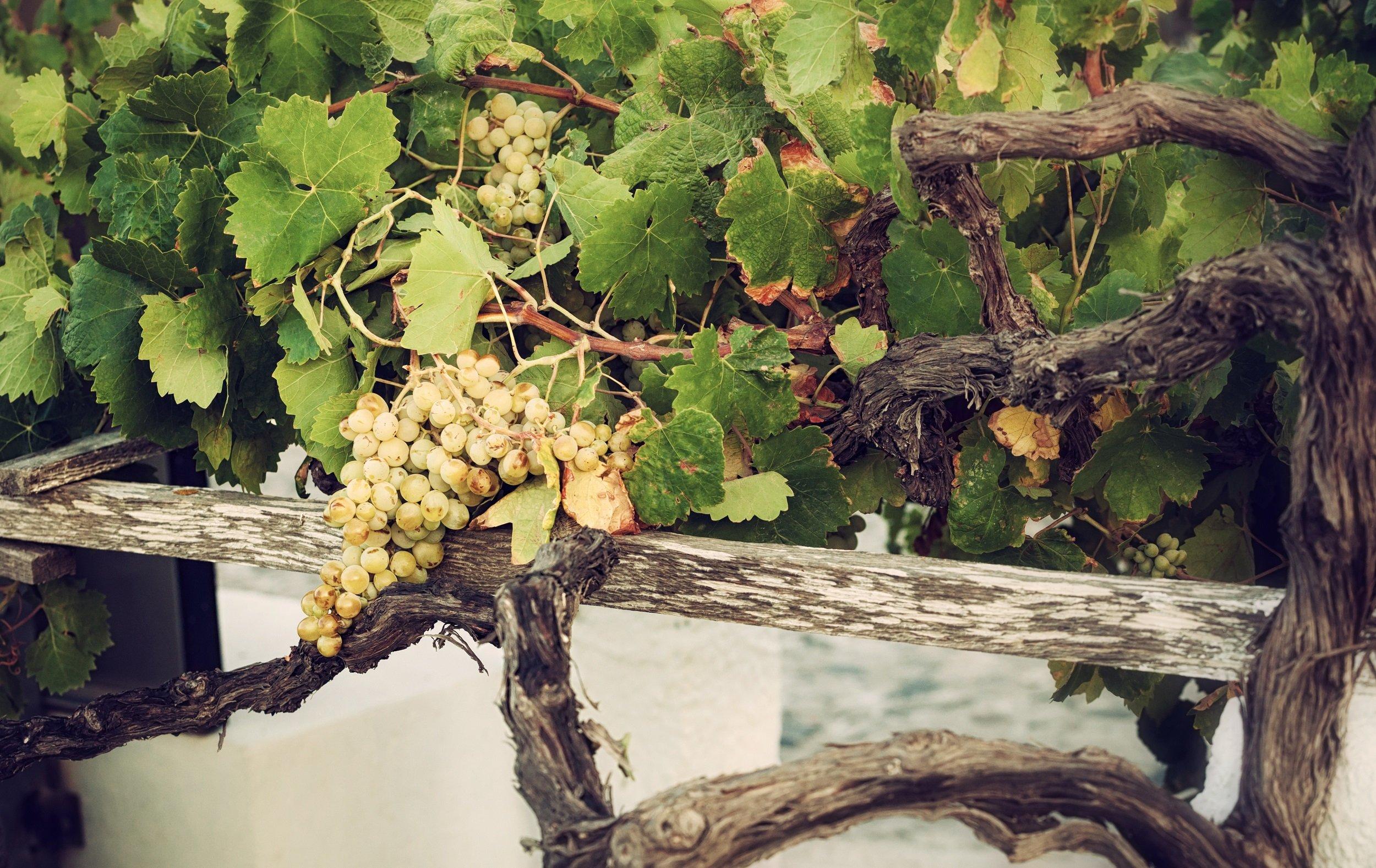 Athens Wine Lover's Tour & Wine Museum_1