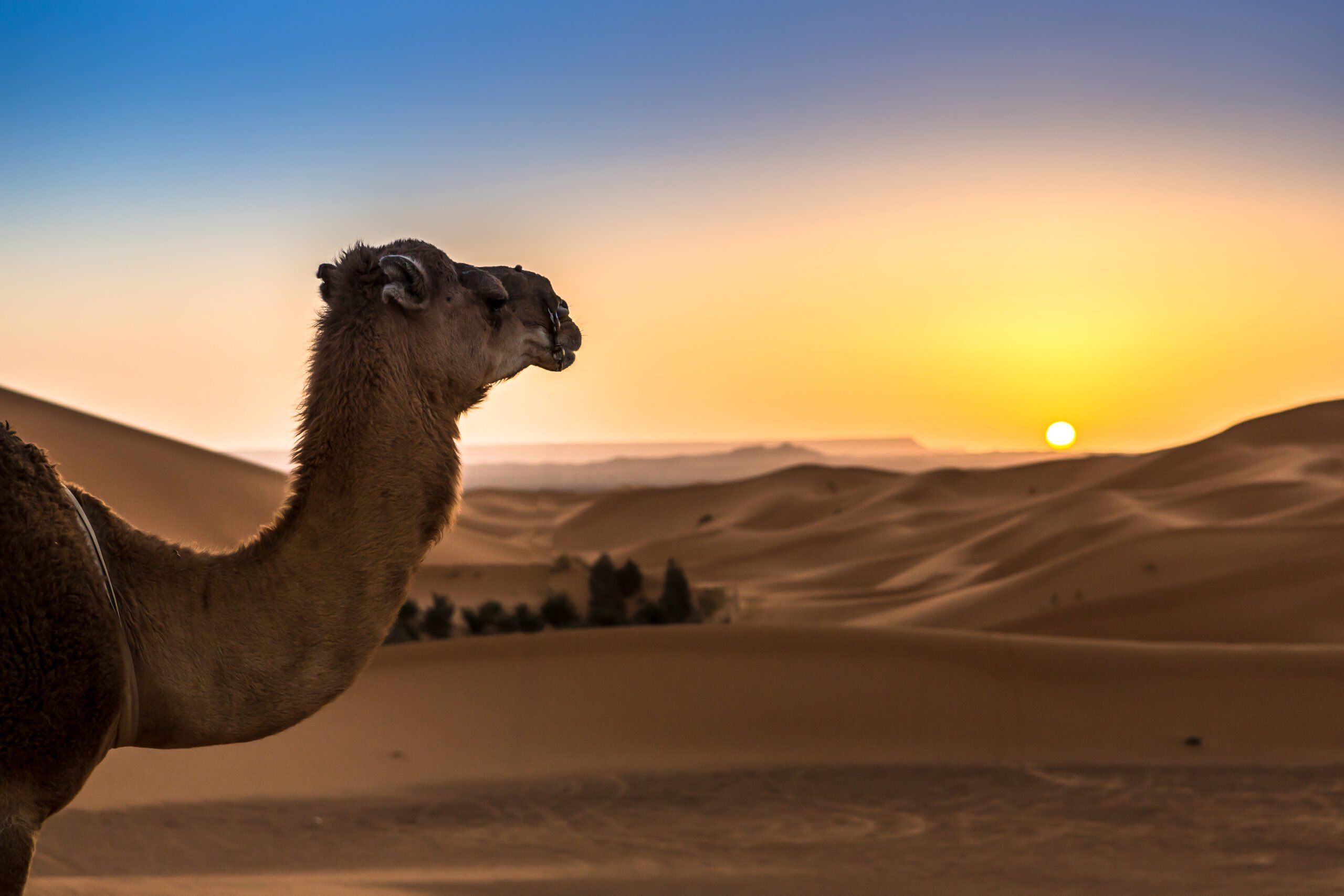 Atlas Mountains, Aït Benhaddou, Valley Of The Roses & Dades Valley 3 Day Private Tour Package 3