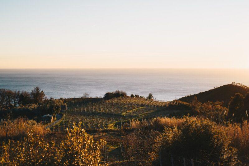 Bonassola Organic Wine Tasting Experience