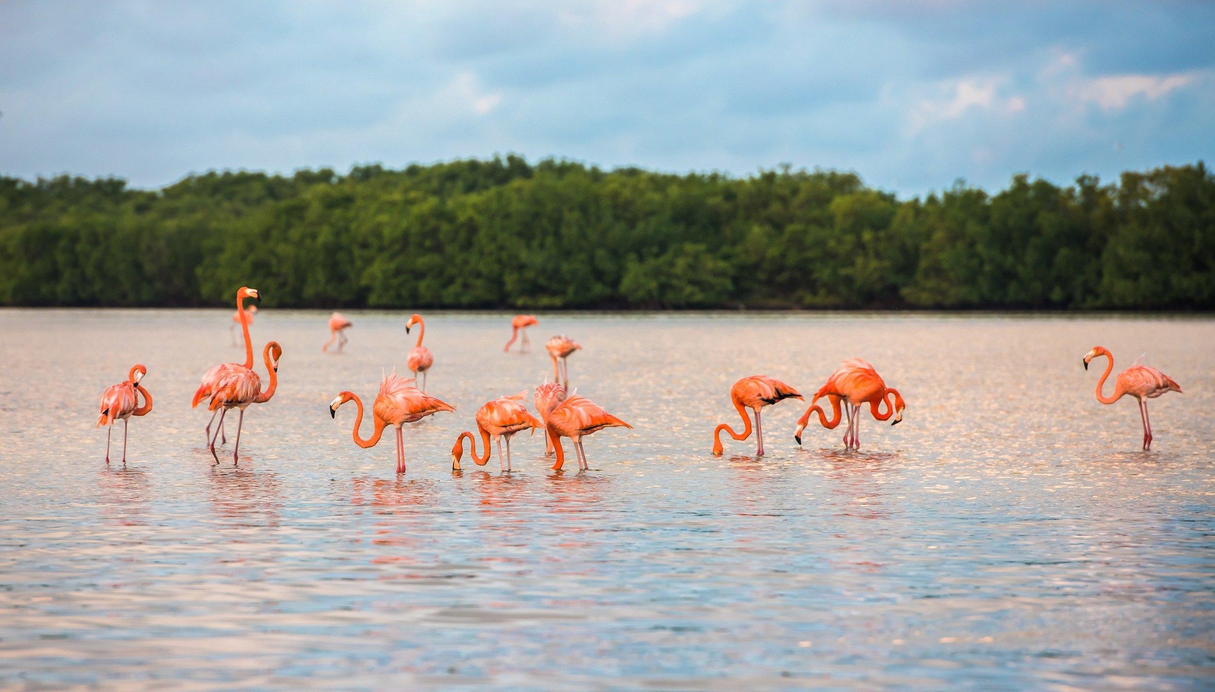 Celestún Nature Reserve Tour From Mérida