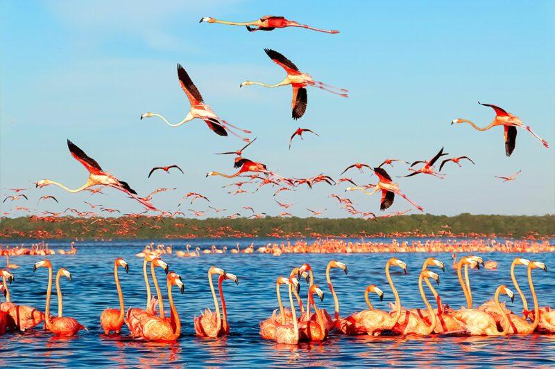 Celestún Nature Reserve Tour From Mérida_2