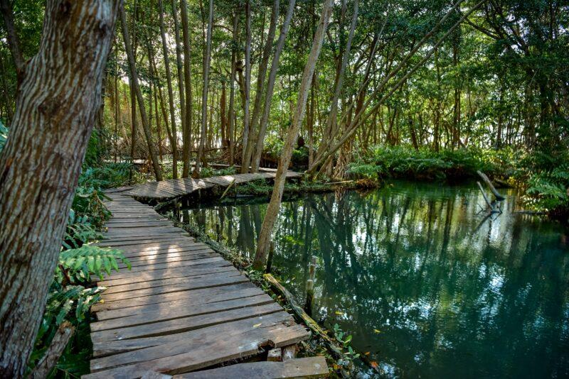 Celestún Nature Reserve Tour From Mérida_3