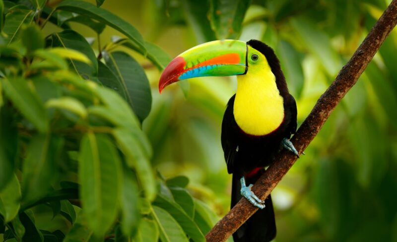Costa Rica 7 Day Semi Private Tour Package_8