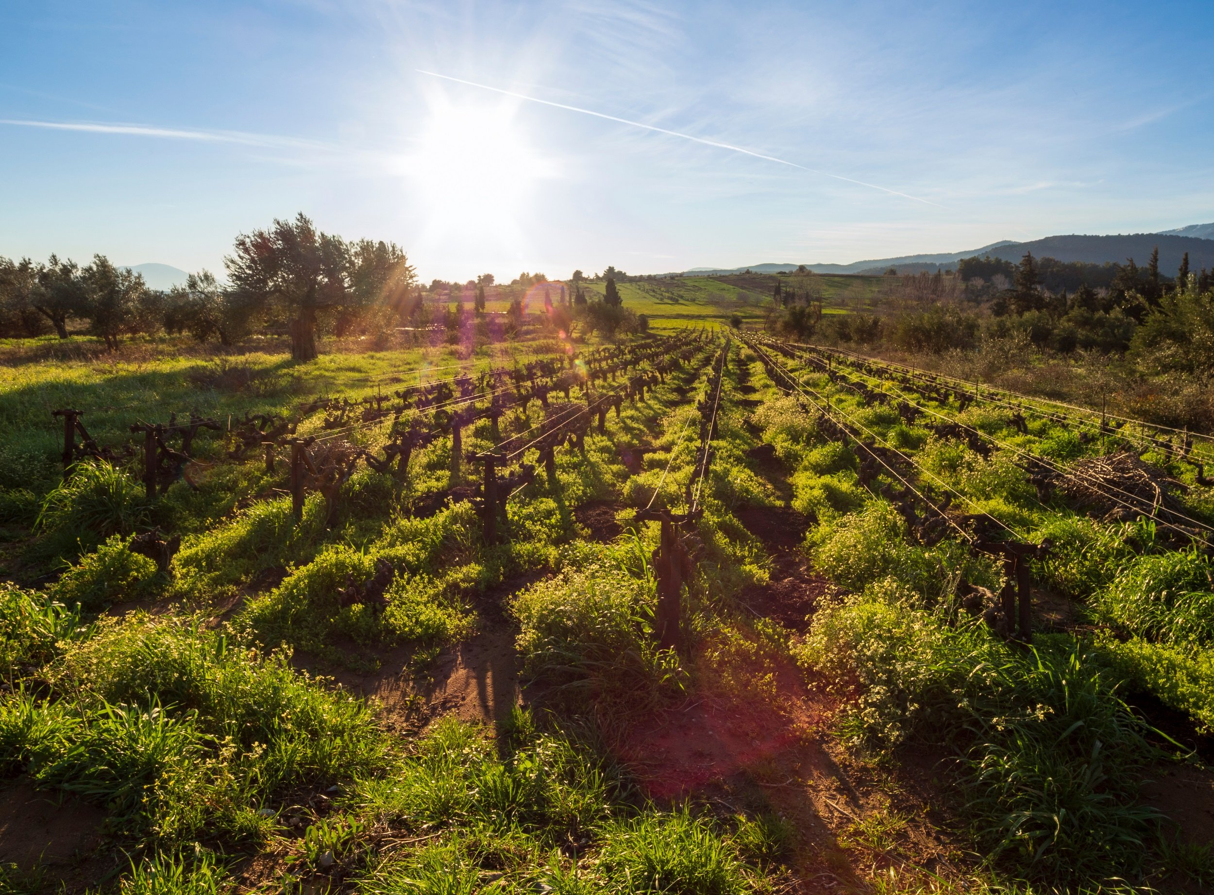 Evia Wine Tour & Spa Experience