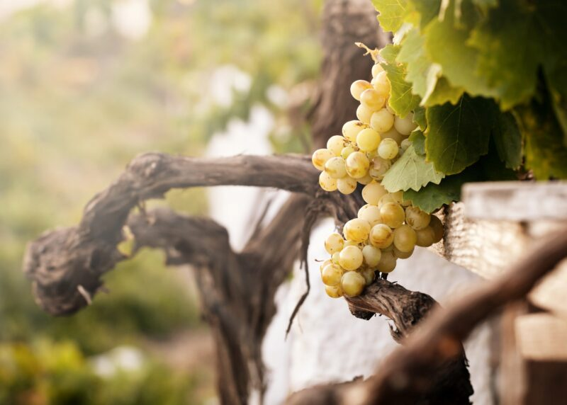 Greek Food & Wine Tasting Tour In Santorini_1