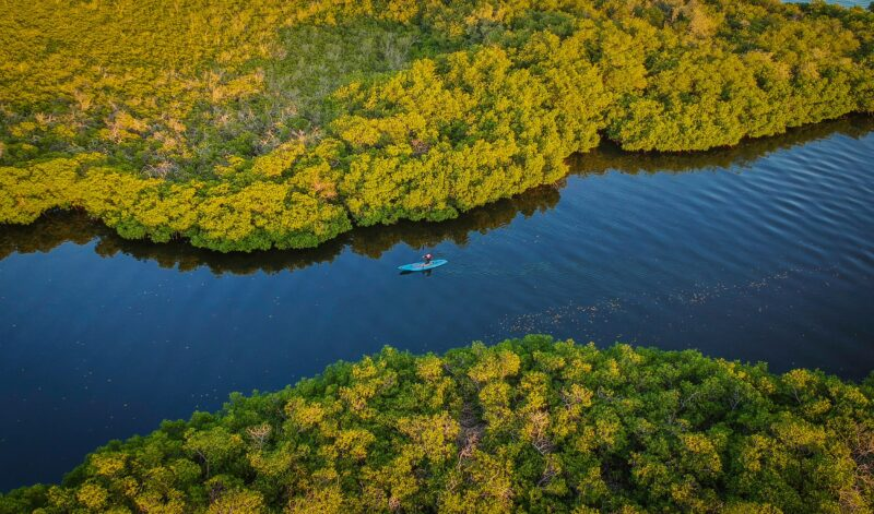 Mangrove Kayak Experience From Puerto Escondido