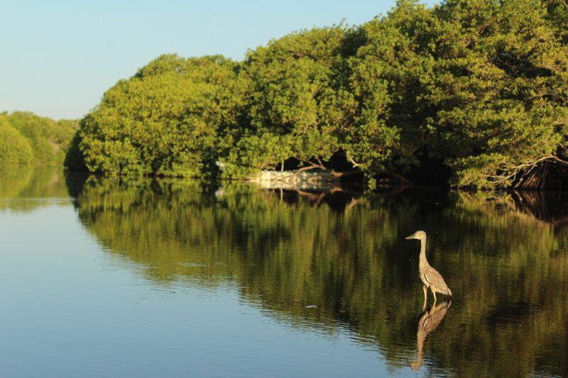 Mangrove Kayak Experience From Puerto Escondido_1