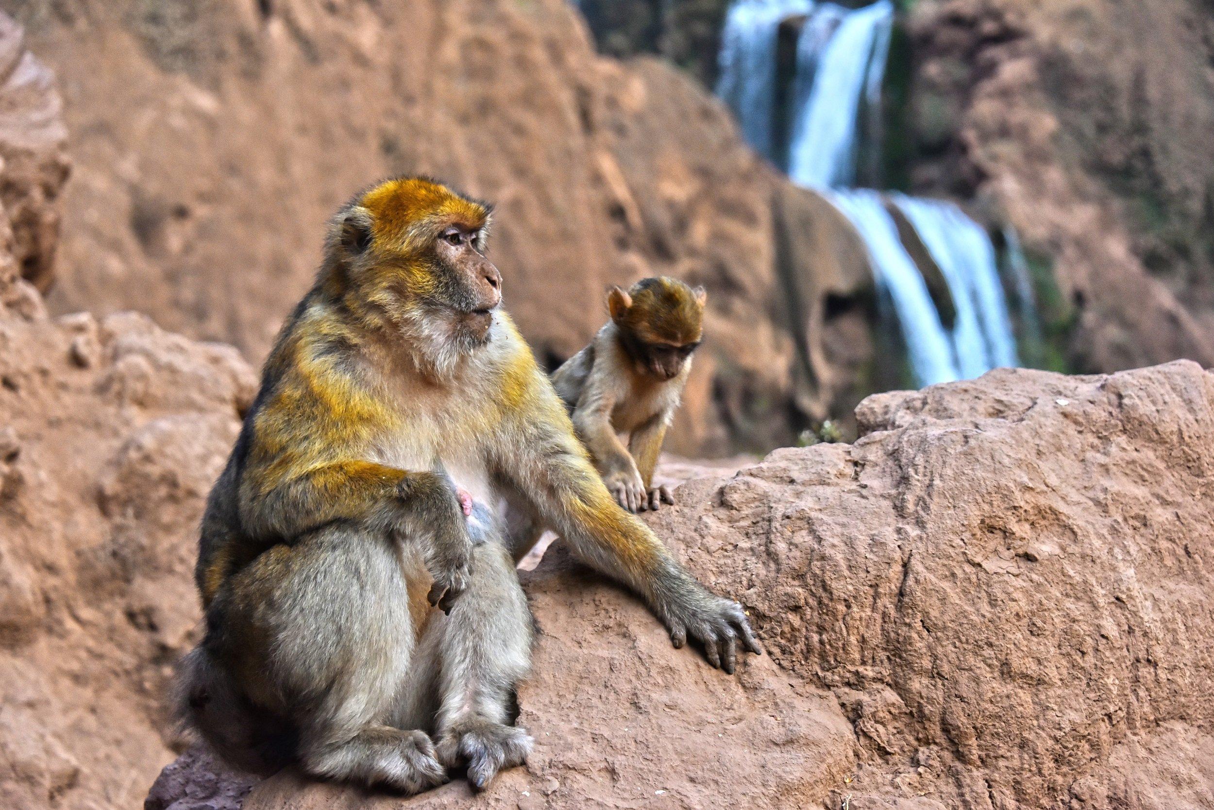 Marrakesh, Essaouira & Atlas Mountains 7 Day Tour Package 4