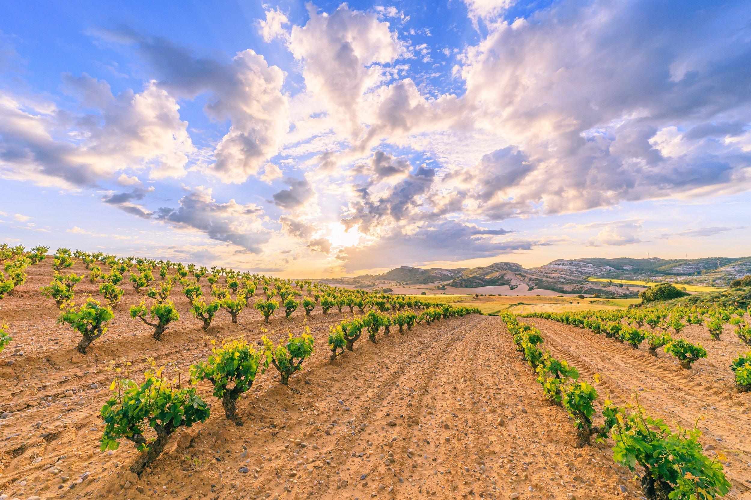 Ribera Del Duero Wine Tour From Madrid_2