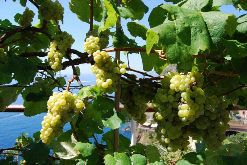 Sensory Wine Tasting Experience In Manarola