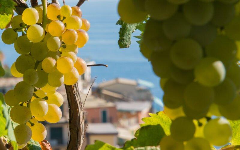Sensory Wine Tasting Experience In Manarola_126_1