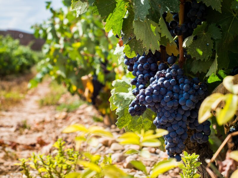 Tagus River Valley Winery Tour From Madrid_1
