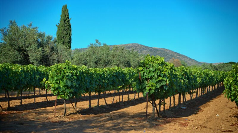 Nemea Winery & Vineyard Tour From Athens_5