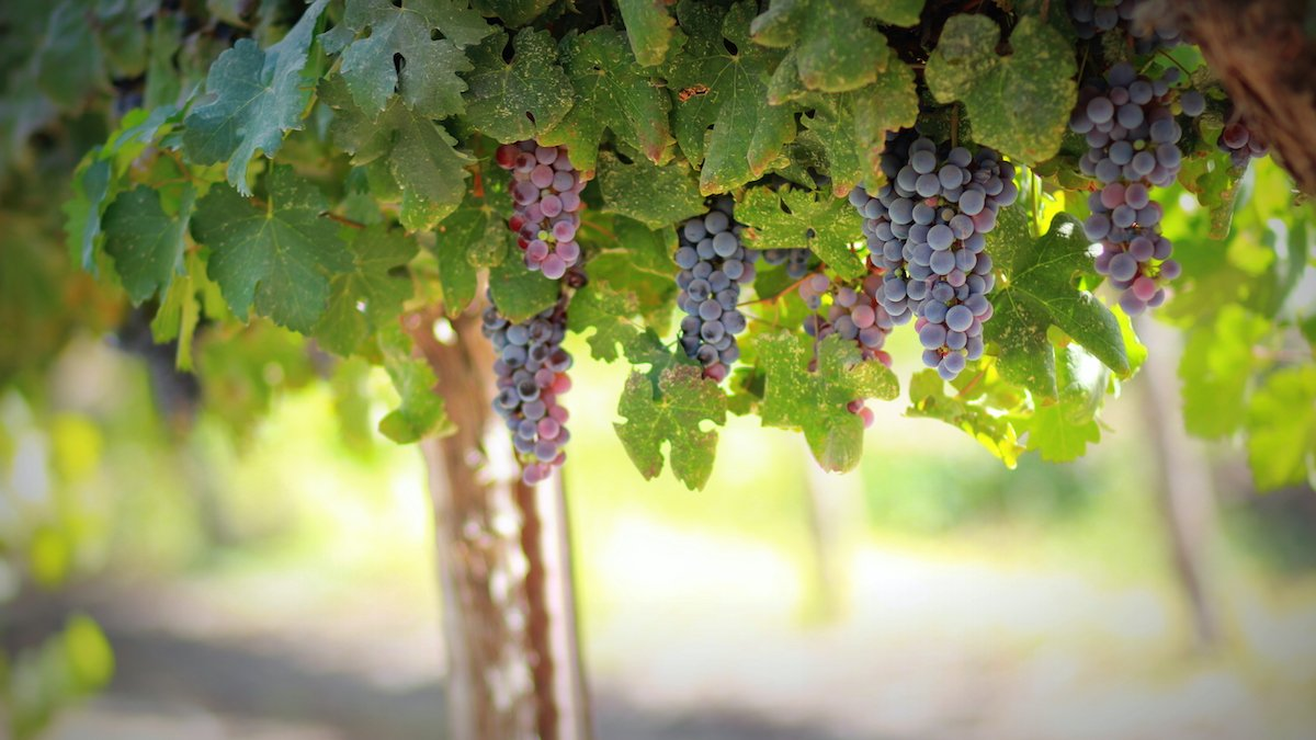 Visit A Local Winery On Our Taste Of Rome 5 Day Tour Package