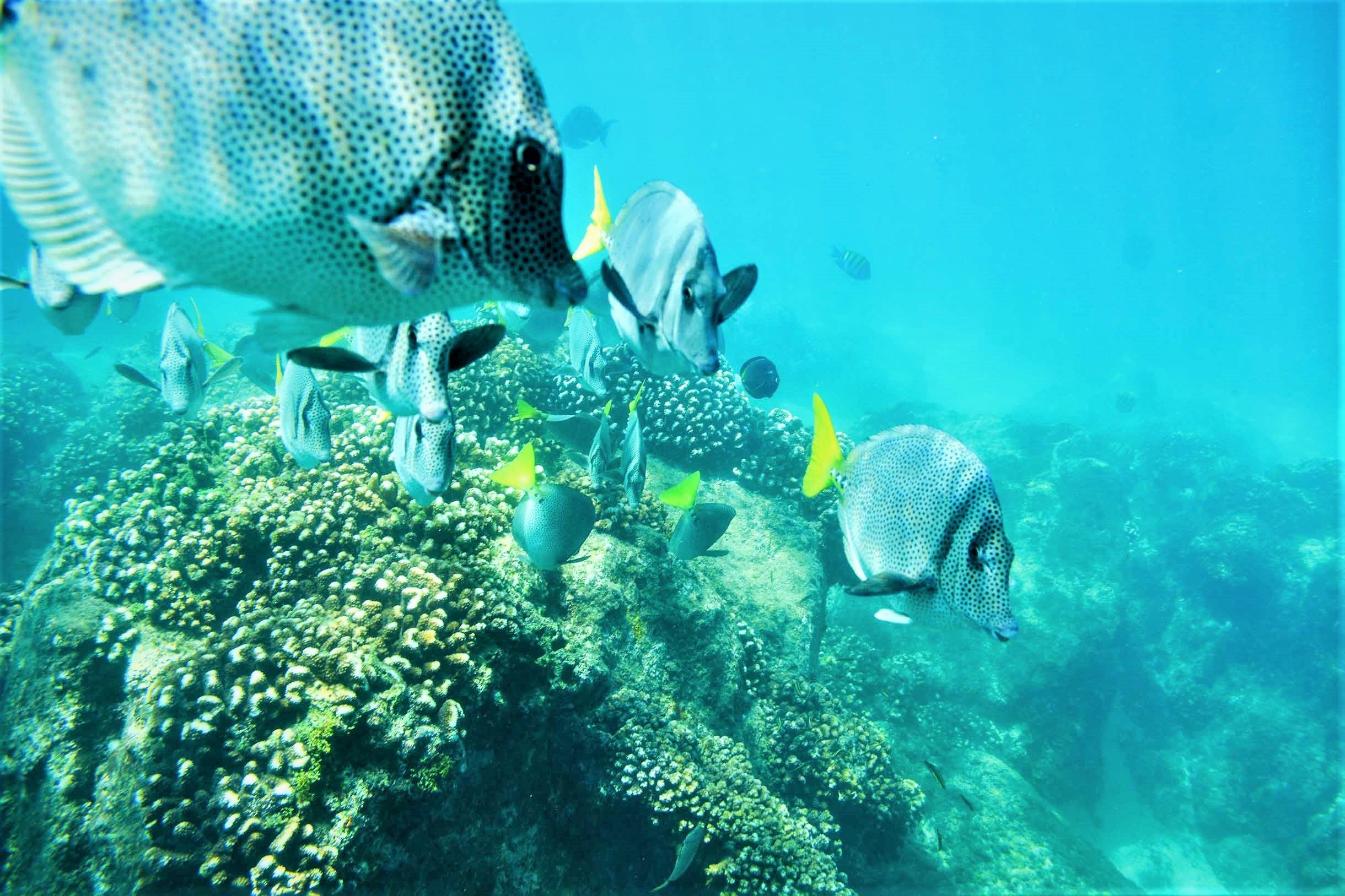 Catamaran Tour & Snorkel Experience From Los Cabos_54 (2)