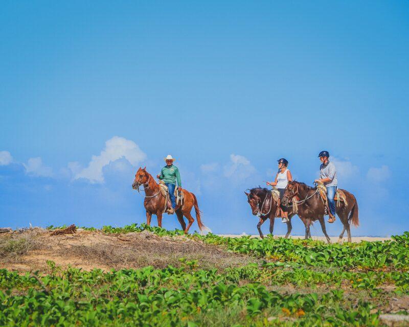 Los Cabos Beach & Desert Horseback Riding Experience For Beginners_54 (6)