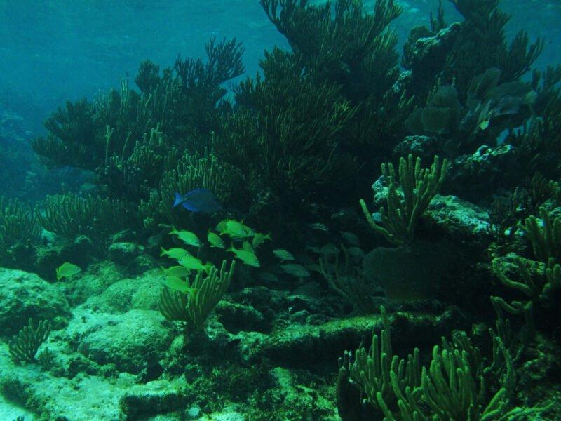 Mayan Underworld Tour From The Riviera Maya_129 (1)
