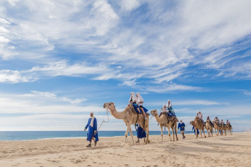 Mexican Outback Tour & Camel Safari From Los Cabos_54 (1)