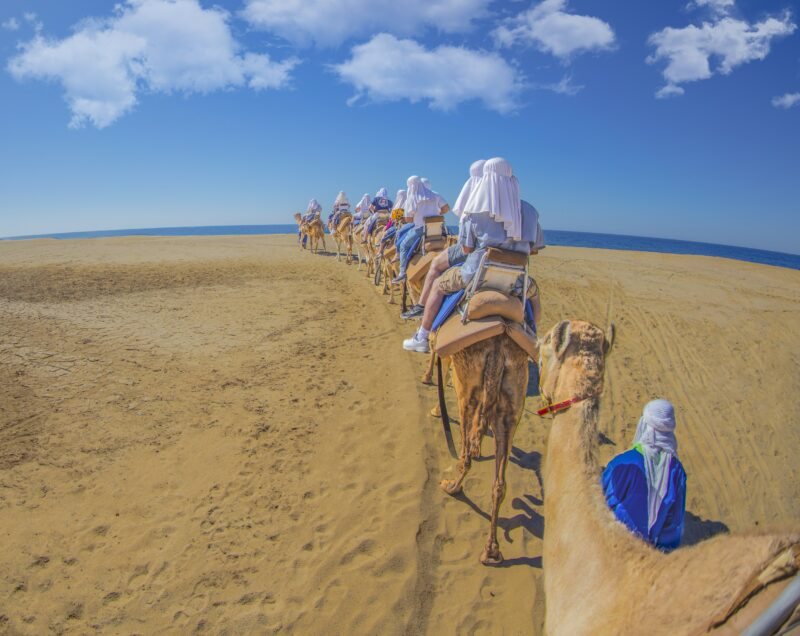 Mexican Outback Tour & Camel Safari From Los Cabos_54 (3)