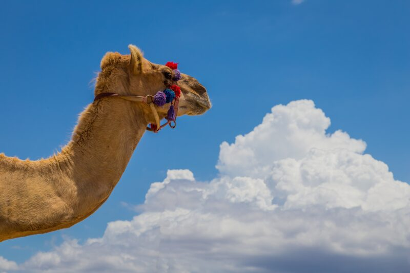 Mexican Outback Tour & Camel Safari From Los Cabos_54 (4)