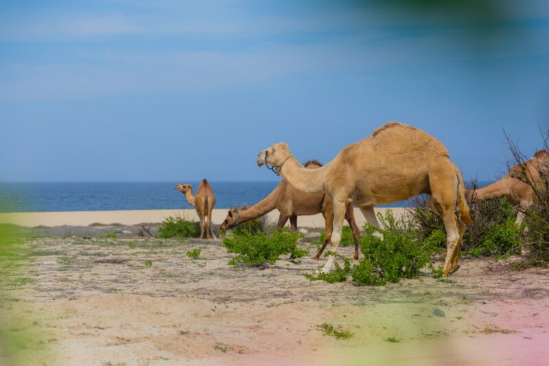 Mexican Outback Tour & Camel Safari From Los Cabos_54 (5)