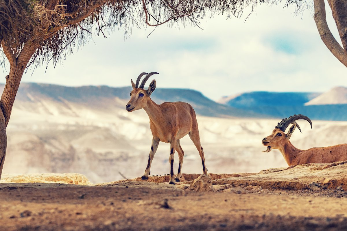 Negev Desert And Bedouin Experience Tour