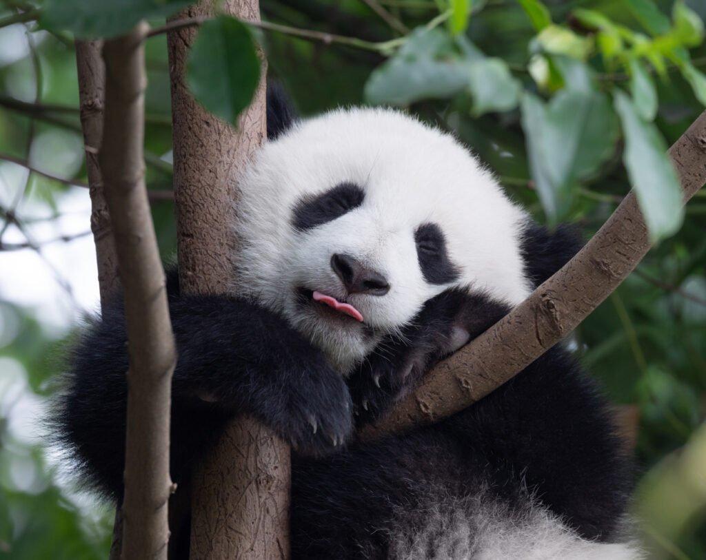 Best things to do in Chengdu