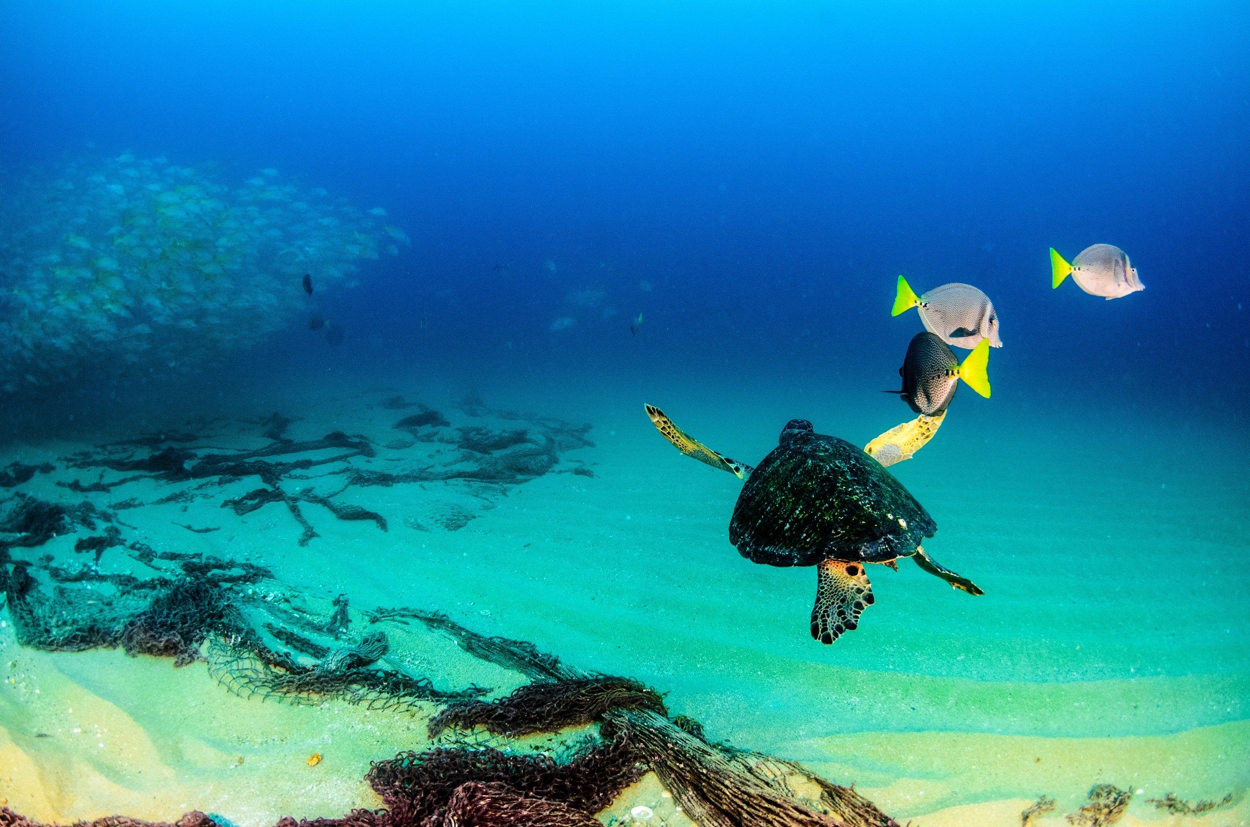 Sea Of Cortez Catamaran & Snorkeling Tour From Los Cabos